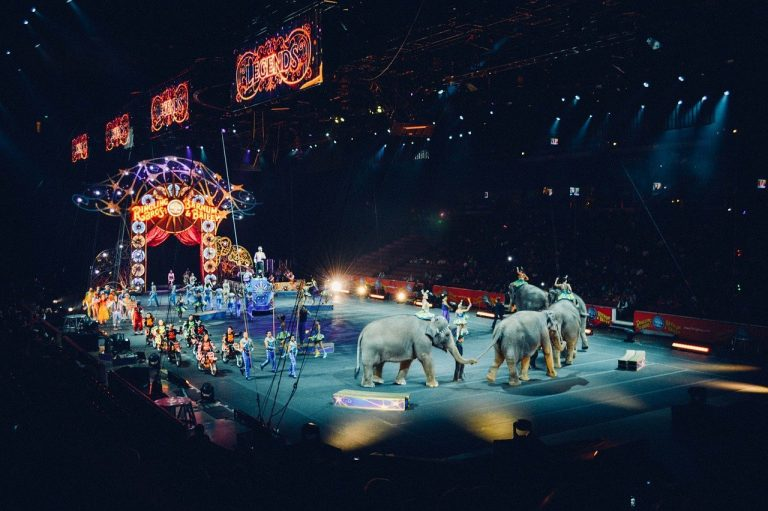 circus, arena, ring